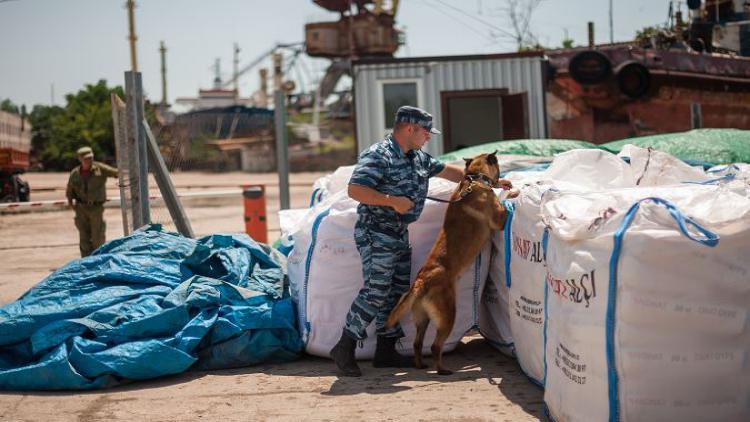 Искать наркотики севастопольским таможенникам помогают спаниель, малинуа и лабрадор-ретривер