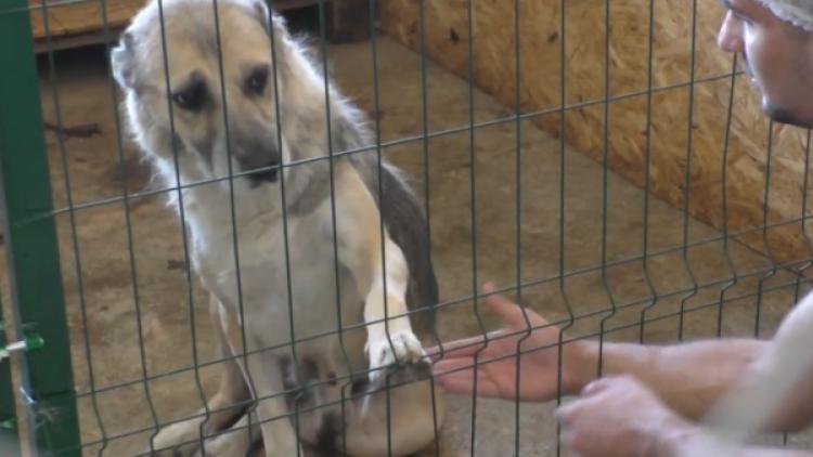 Как живет севастопольский городской приют бездомных животных