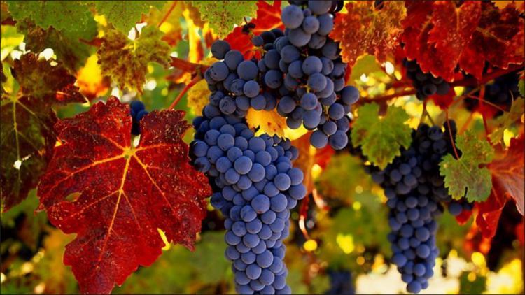 Организаторы WineFest в Севастополе раскрыли имя приглашенной звезды