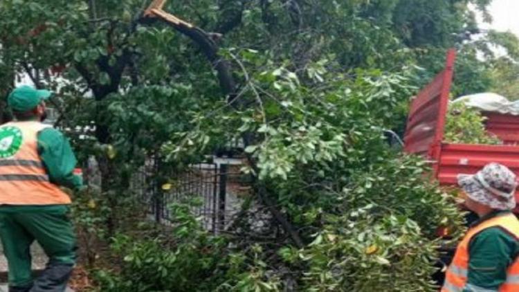 В Севастополе ливнем затопило дворы, повалило деревья, разрушена подпорная стена [фото]