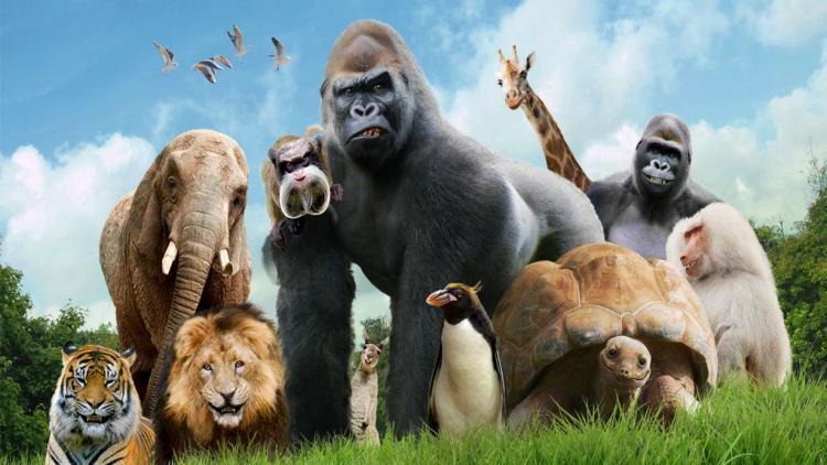 В Севастополе хотят создать городской зоопарк