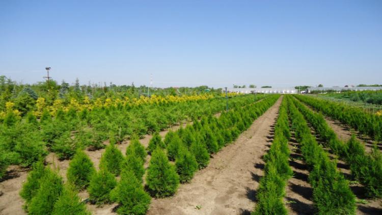 В Севастополе будет восстановлен питомник деревьев