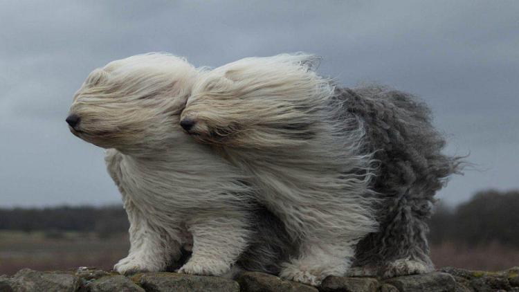 Крымчан предупредили об усилении ветра