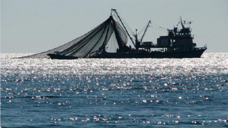 В Севастополе планируют построить десять рыболовных судов